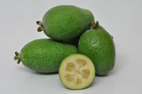 Feijoa Den's Choice